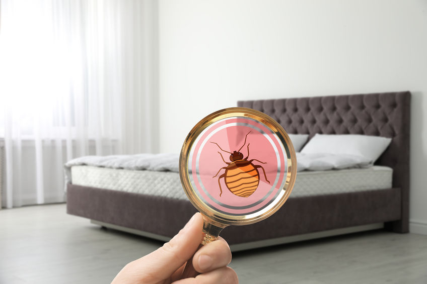 How Pest Control Became a Vital Issue for Hotels Through COVID-19